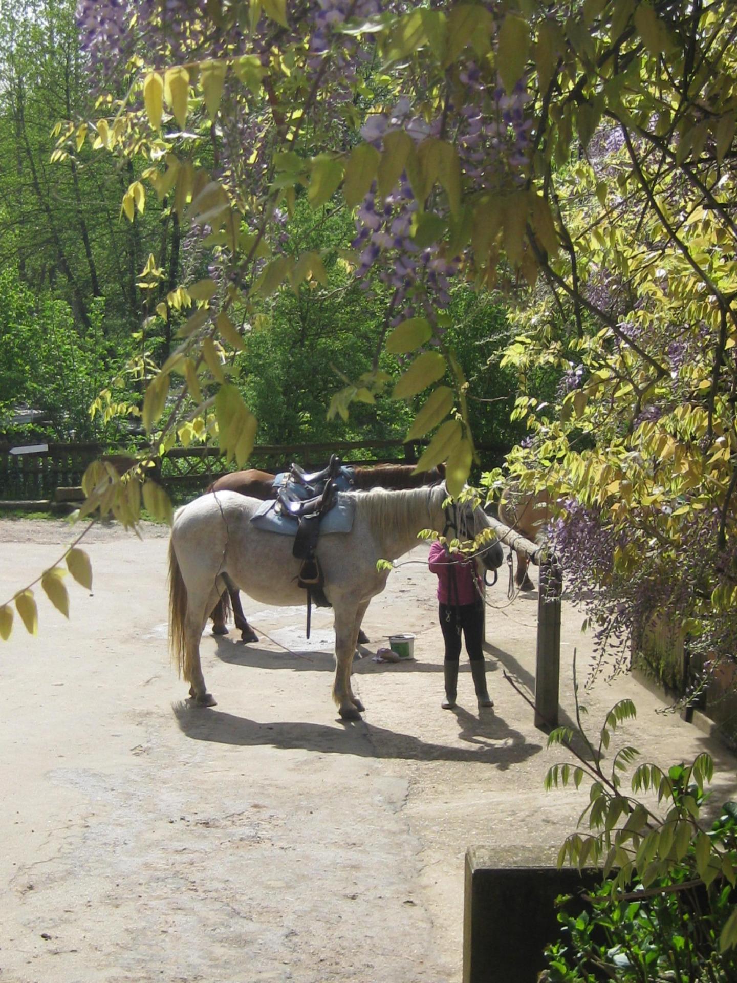 2015 baloo mv poney 011