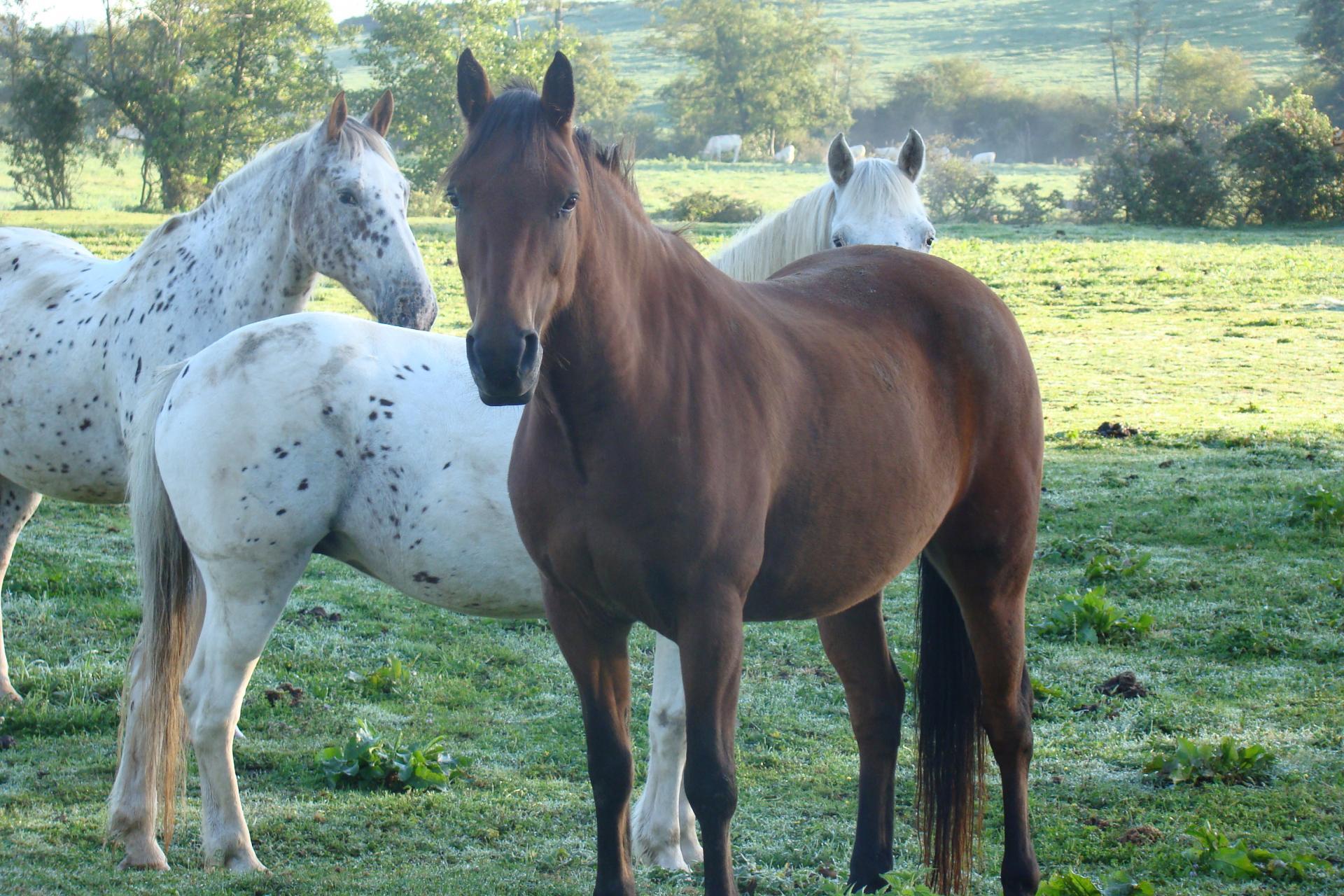 des chevaux pour le plaisir